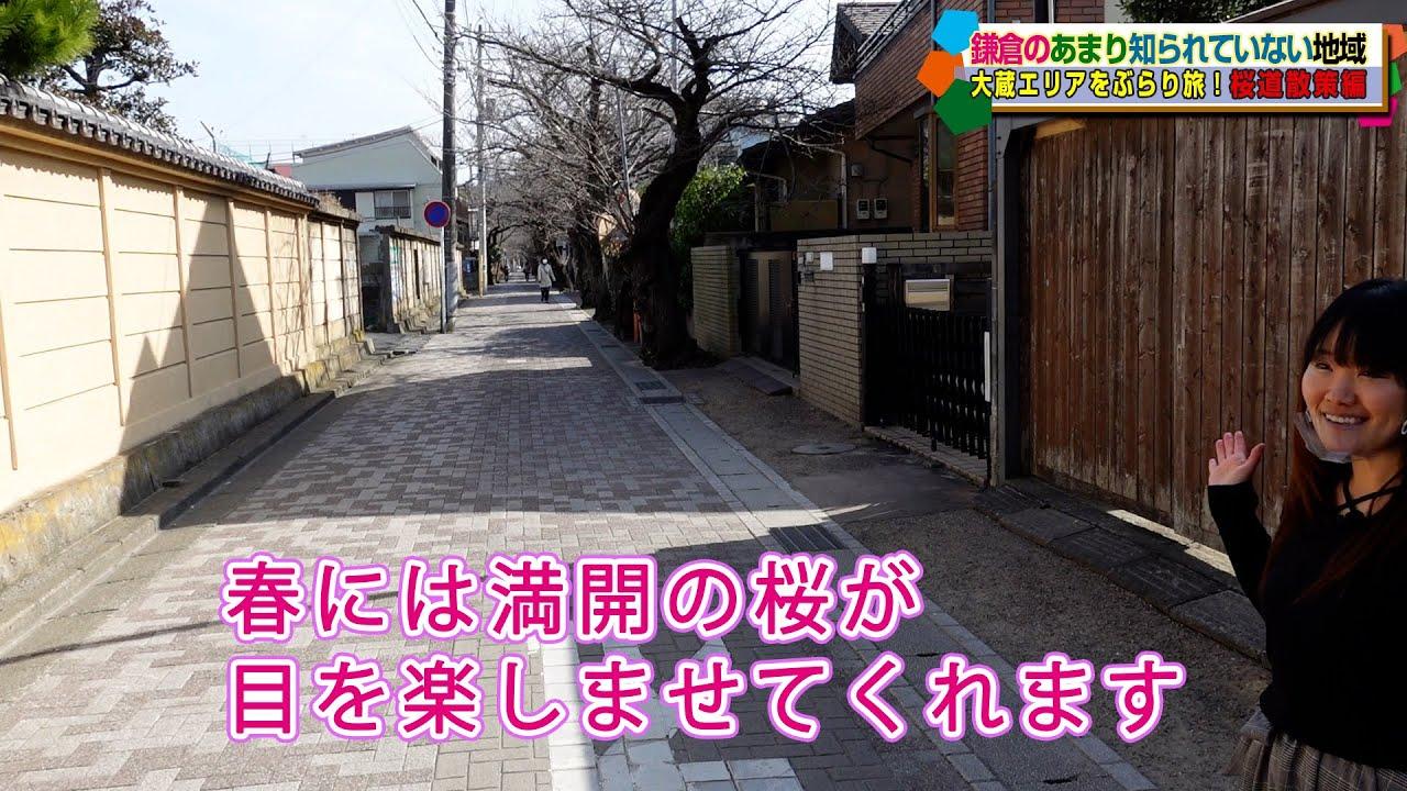 大蔵ぶらり旅2 桜道編